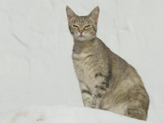 Finca Luciana - cat chat